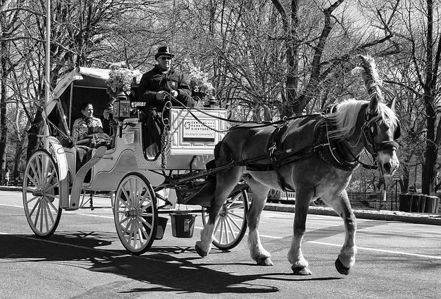 new yorki kocsikázás a Central Parkban